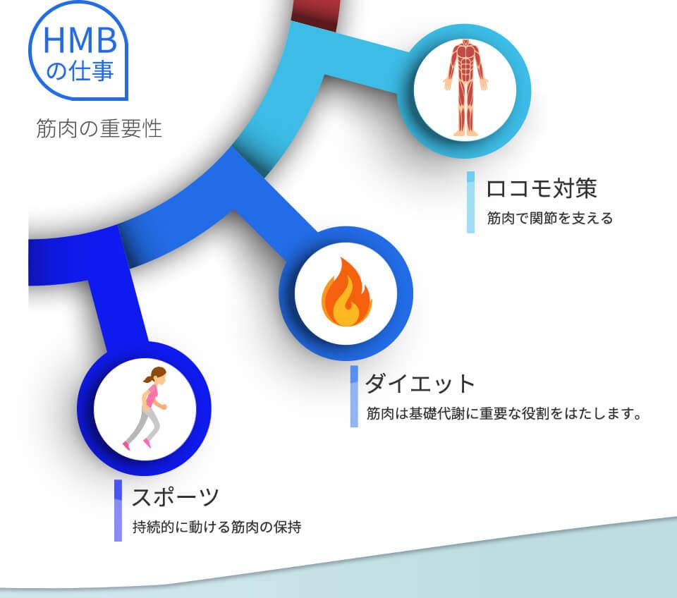 hmb05.jpg